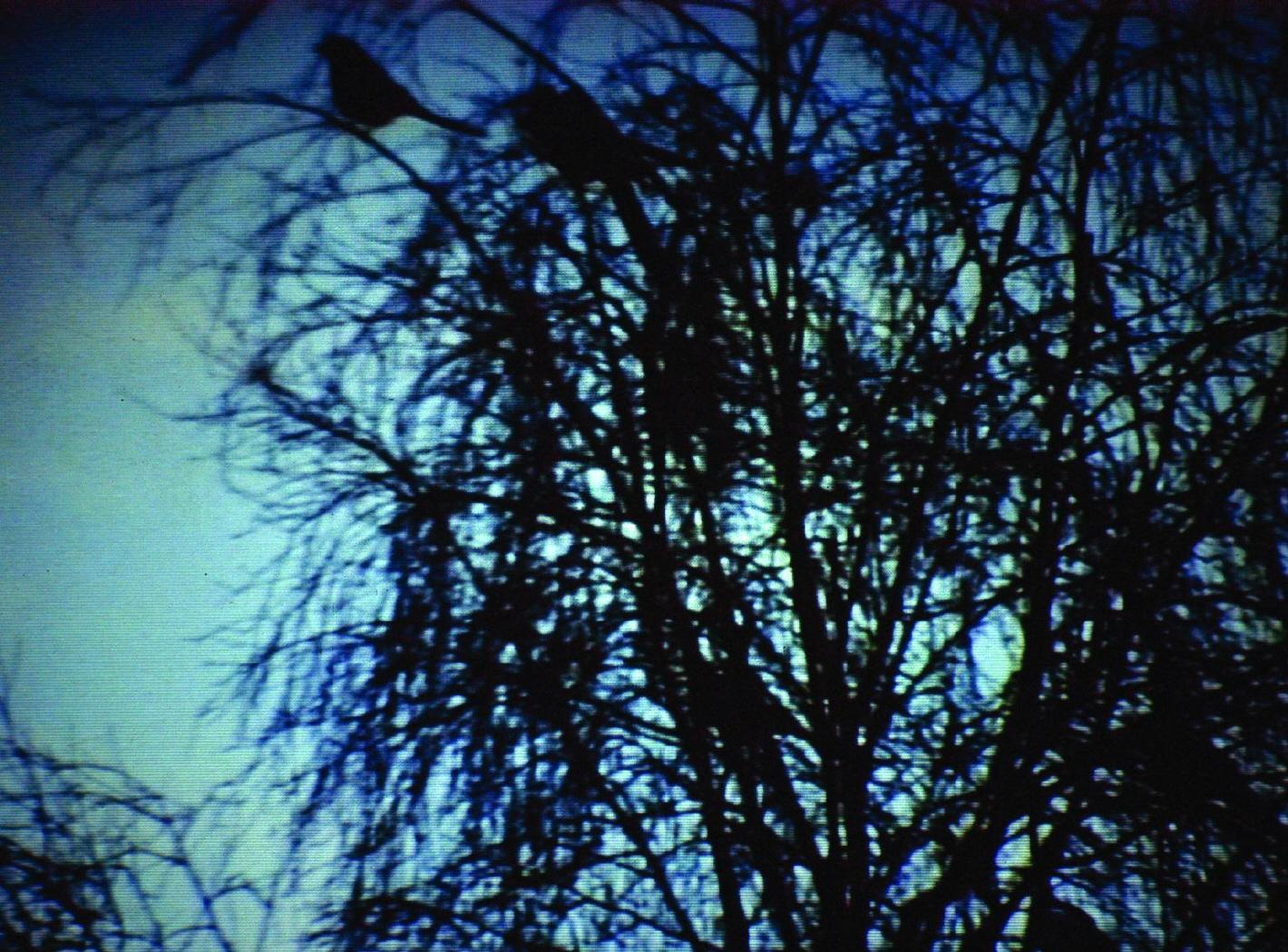Fotograma del video
