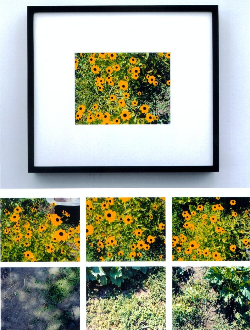 Imagen de la obra con diversas imágenes de muestra