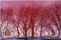Red Trees, Berlin