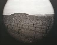 Dominus Estate Vineyard, Yountville, California. Winery by Herzog & de Meuron