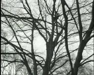 Tree Dance