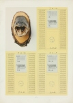 Urzeit / Uhrzeit, Fisch und Vogel, Ia, lIb